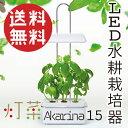 LED付き 水耕栽培 キット Akarina15(アカリーナ15) /灯菜 型番:OMA15 水耕栽培器 インテリア 間接照明 簡単 手軽 インドアグリーン お...