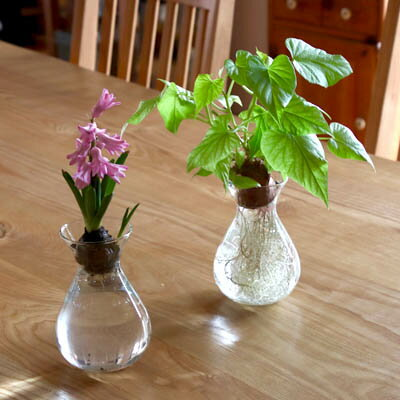 水栽培 花瓶 フラワーベース ヒヤシンス ガラス製 フラワーポット TE094 球根 アクシス プレゼント ギフト