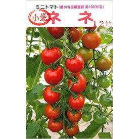 種 【ミニトマト『ネネ』の種12粒入り】 水耕栽培 おすすめ