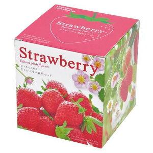 ストロベリー 栽培セット いちご イチゴ 苺 ガーデン 手軽 癒し グリーン ハーブ