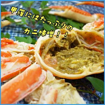 ギフト茹でズワイ蟹姿たっぷり5〜6杯合計3kgかにカニ食べ方レシピつきグルメずわい贈答