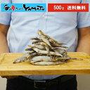 初めての方限定 訳あり 子持ちシシャモ一夜干し たっぷり500g ししゃも 柳葉魚 干物