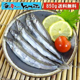 訳あり 子持ちシシャモ一夜干し たっぷり850g ししゃも 柳葉魚 干物【クーポンで580円OFF】 あす楽
