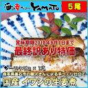 訳あり 国産イワシの生姜煮 30g x 5本入り 冷凍食品 簡単調理 いわし 鰯