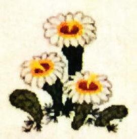 フレメ クロスステッチ刺繍キット 輸入 Saguaro,Arizona ベンケイチュウ(サワロ)/アリゾナ州 Haandarbejdets Fremme 刺しゅう デンマーク 北欧 12B GB 上級者 30-2970,40