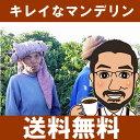 マンデリン・スマトラタイガー インドネシア specialtycoffee フルシティロースト コーヒー