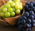 【フルーツギフト】70代女性へ秋の美味しいギフト!オススメのフルーツを教えて!