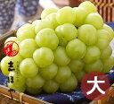 桃太郎ぶどう(8月上旬〜出荷)【お中元ギフト】約900g(1房)