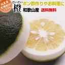 【特別栽培】定番 橙(だいだい) 5kg     【送料無料】【有機肥料100%】【減農薬栽培・低農薬栽培だから見た目は訳あり・わけあり】【smtb-k】【w1】【ポン酢用】
