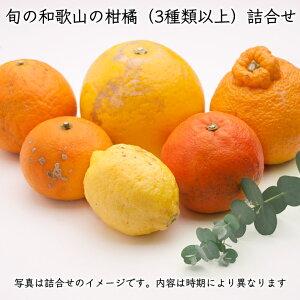 [定番]柑橘詰合せ慣行5kg          【送料無料】