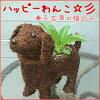 我有這個 (狗和狗) 孩子的快樂草種植