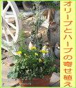 Img60356871