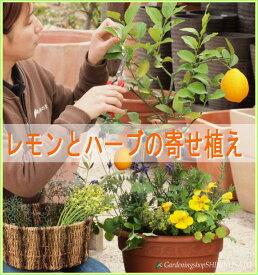 【送料無料】[自宅●プレゼントに・開店祝・新築祝・ギフトに最適]実付きレモンとハーブ香りの寄せ植え