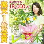 レモンの木・ガーデニング果樹・実のなる木(植木)の通信販売