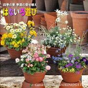 選べるカラー4種類!好きな色の寄せ植えをお選び下さい。季節のお花!色とりどりの寄せ植え