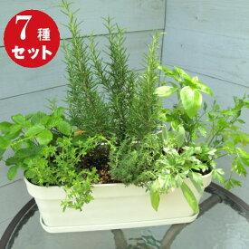 [ギフト●ご自宅用に]キッチンハーブ7種香りの寄せ植え