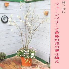 【送料無料】ジューンベリーと季節の花寄せ植え