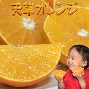 天草 みかん 贈答用 2kg 8玉入 送料無料 特級 高級 贈答品 贈り物 天草オレンジ 天草タンゴール