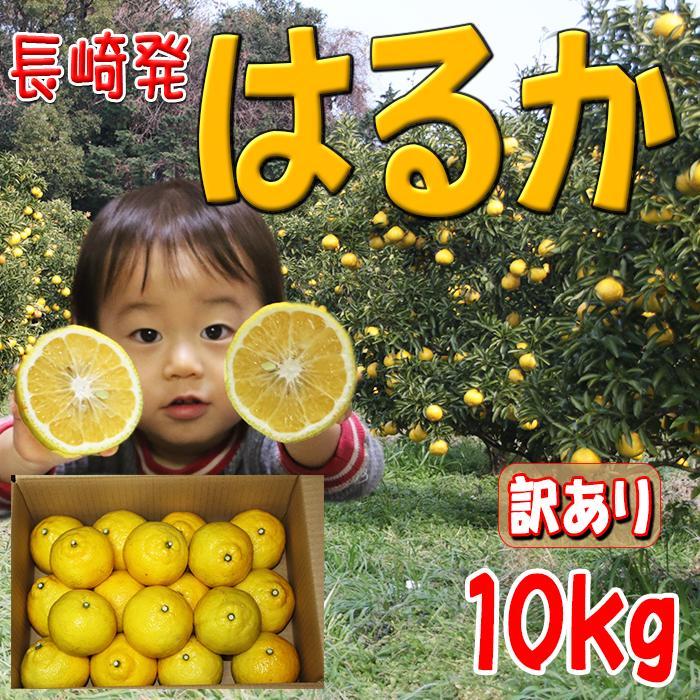 九州島原産 はるか 訳あり 10kg 予約受付中 日向夏から生まれた傑作