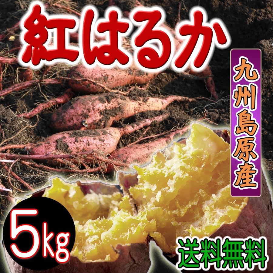 紅はるか 訳あり 5kg 11月中下旬発送開始 長崎県蜜芋 焼き芋 蒸し芋 大学芋 子供もバクバク食べます