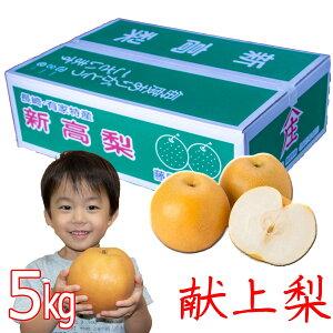 新高 梨 7玉入り (700g以上の大玉) 5kg 高級梨 農家直送 梨 農家直送 贈答用