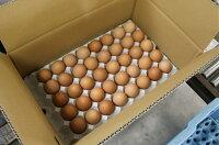 雲仙たまご10kg箱入り(M:180個L:160個から選べます)卵かけご飯ゆで玉子なんでもござれ!究極の卵卵卵かけご飯高級卵九州新鮮生卵TKGもみじたまご鶏卵アレルギー10.0kg〜29.9kgシルバーウィーク