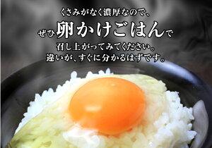【クーポン利用で1000円OFF】 高級卵 たまご20個×4 巣ごもり 免疫アップ