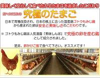 雲仙たまご20個入り(M:Lから選べます)6箱まで同梱できます卵卵かけご飯高級卵九州新鮮生卵TKGもみじたまご鶏卵アレルギー〜1.9kgお持たせお返しなどシルバーウィーク