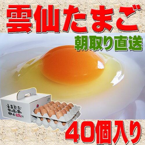 送料無料 雲仙 たまご 40個入り 卵かけごはんでどうぞ 卵 卵かけご飯 高級卵 九州 新鮮 生卵 TKG もみじたまご 鶏卵 アレルギー 2.0kg〜4.9kg
