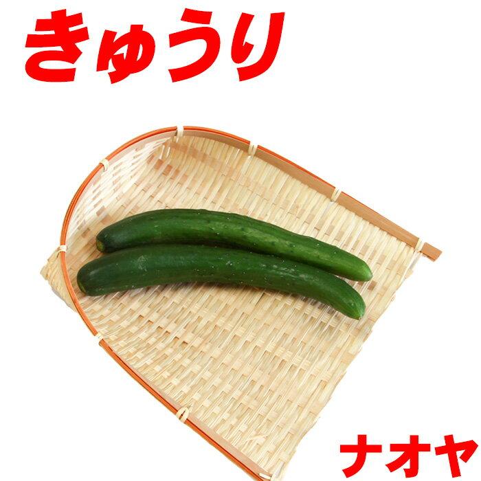 きゅうり 2〜3本