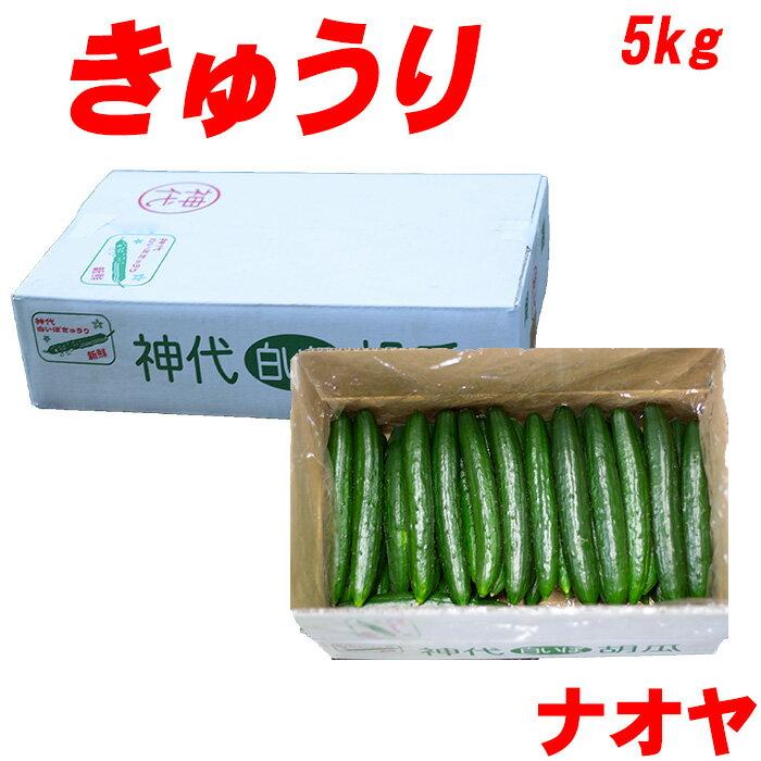 九州朝摘み きゅうり 5kg 選べる30〜50本 A品 キューリ 胡瓜 漬物 もろきゅう 浅漬 取り寄せ
