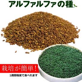 アルファルファ 種 500g 高品質 業務用 オーストラリア産 (Alfalfa 野菜種 あるふぁるふぁ seed スプラウト シード 栽培 野菜)【送料無料】