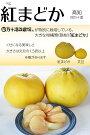 紅まどか5〜6玉(約8kg)晩柑柑橘高知四万十