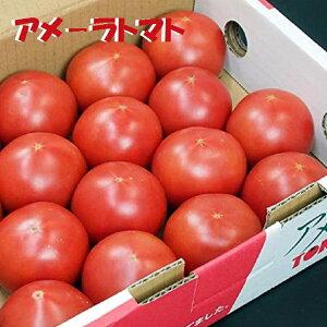 静岡産アメーラトマト約1K箱噛み締める毎に甘味が広がります!!【送料無料−クール便】