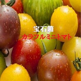 愛知・和歌山・岐阜他ミニトマトの宝石箱約1K箱
