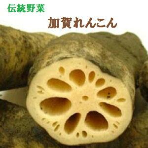 《予約》加賀伝統野菜【加賀れんこん】約2k箱8月下旬から発送予定です