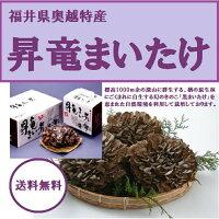 九頭竜まいたけ(福井県奥越産)約450g1株入り化粧箱