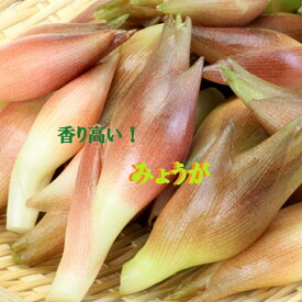 ★ポッキリ企画!高知県産みょうが約400g入りかほり優しい!