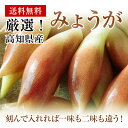 【激安!!さらに延長!】高知県産みょうがバラ約400g入りかほり優しい!【送料無料】