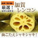 加賀伝統野菜【加賀れんこん】約3k箱【送料無料】