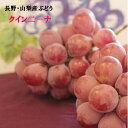 山梨・長野県産【クインニ−ナ】葡萄タップリ!訳あり約1.5K箱9月中旬過ぎから予定!希少で話題沸騰の赤いぶどうです