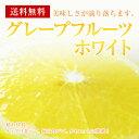 グレープフルーツ【ホワイト】30個入り1ケース【送料無料】