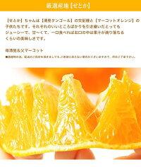 せとかオレンジ