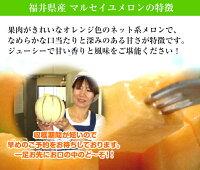 福井県産マルセイユメロン【花咲紅姫メロン】2Lサイズ以上3玉化粧箱【送料無料】