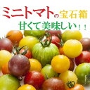 愛知・和歌山・岐阜他ミニトマトの宝石箱タップリ約2K箱【送料無料】