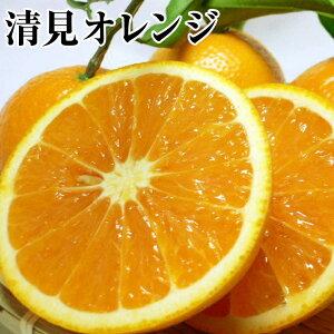 【清見オレンジ】B級約5K箱サイズ指定なし⇒送料無料