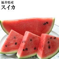 福井県産西瓜大玉2玉化粧箱送料無料