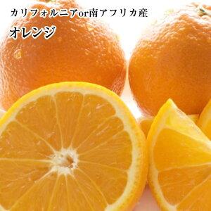 【オレンジ】大玉10個入り