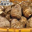 福井県JAテラル越前里芋秀品約3K箱サイズ指定なし越前の清らかな水と澄んだ自然に囲まれて育った里芋です大野・上庄・…