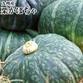 国産かぼちゃ(南瓜)【3玉箱】送料無料ホクホクのかぼちゃ!南 の大地からお買得!!健康野菜・煮物・シチュ-・天ぷらに